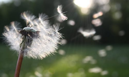 wind and seed